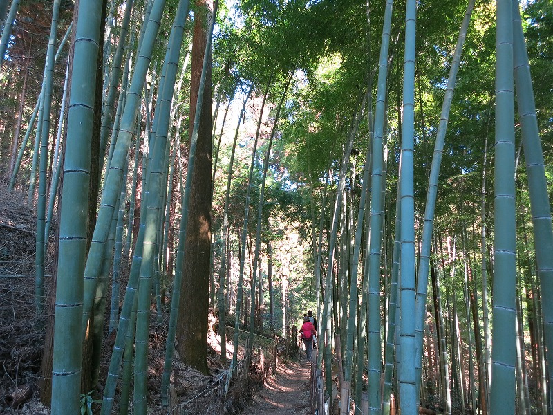 竹林をゆく。
