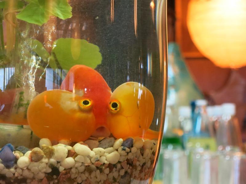 金魚もいるよ